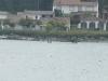 junio-2013-travesia-la-toja-3